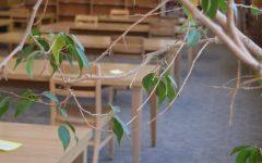 Siena Snapshots: Library